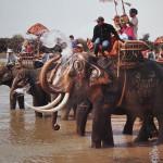 บวชนาคช้าง (Theelephants ordain procession)
